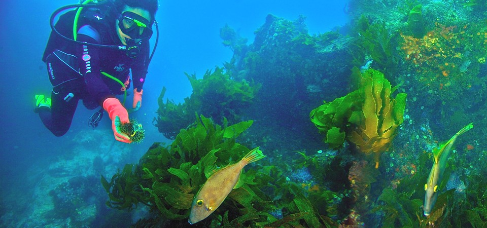 Cathedral Cove diving